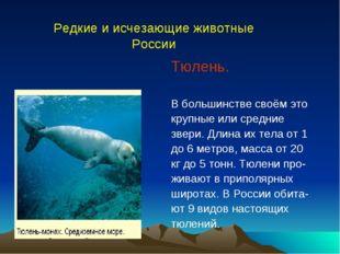 Тюлень. В большинстве своём это крупные или средние звери. Длина их тела от