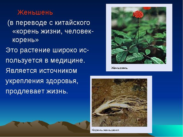 Женьшень (в переводе с китайского «корень жизни, человек-корень» Это растени...