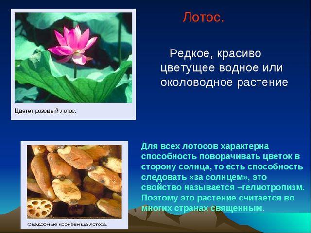 Лотос. Редкое, красиво цветущее водное или околоводное растение Для всех лот...
