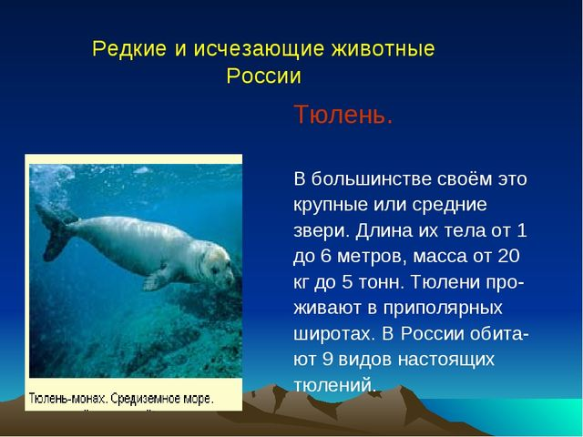Тюлень. В большинстве своём это крупные или средние звери. Длина их тела от...