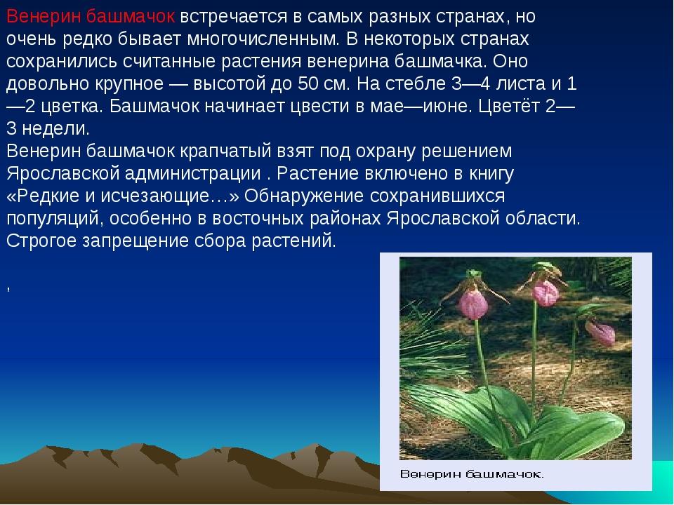 Венерин башмачок встречается в самых разных странах, но очень редко бывает мн...