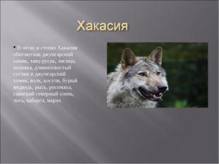 В лесах и степях Хакасии обитаюткак джунгарский хомяк, заяц-русак, лисица, п