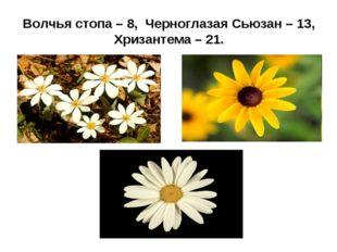 Волчья стопа – 8, Черноглазая Сьюзан – 13, Хризантема – 21.