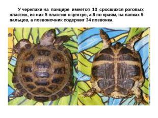У черепахи на панцире имеется 13 сросшихся роговых пластин, из них 5 пластин