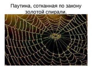 Паутина, сотканная по закону золотой спирали.