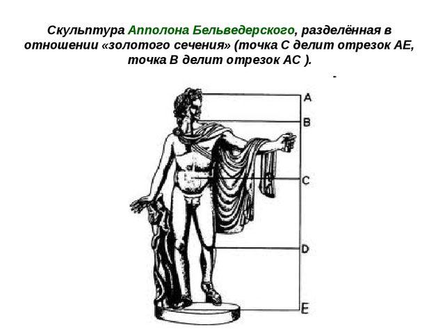 Cкульптура Апполона Бельведерского, разделённая в отношении «золотого сечения...