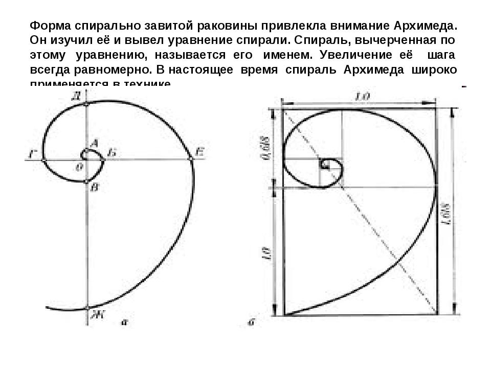 Форма спирально завитой раковины привлекла внимание Архимеда. Он изучил её и...