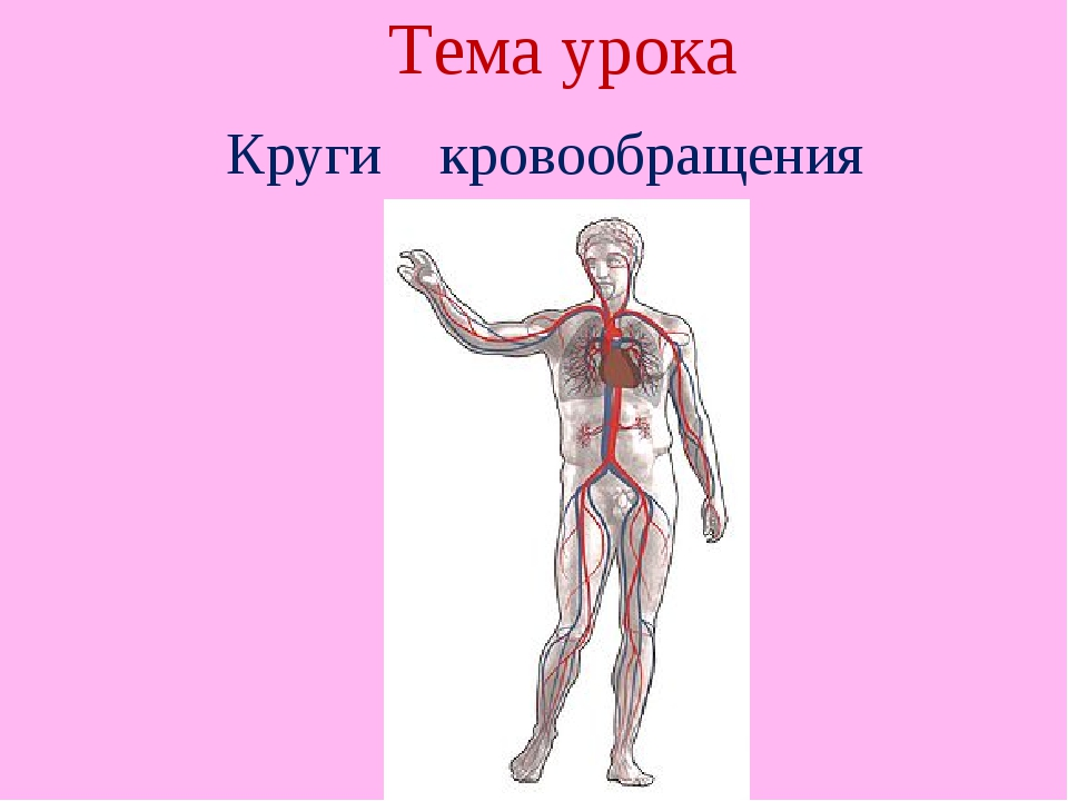 Тема урока Круги кровообращения