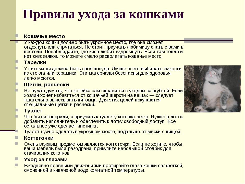 Содержание и уход за кошкой в домашних условиях 184
