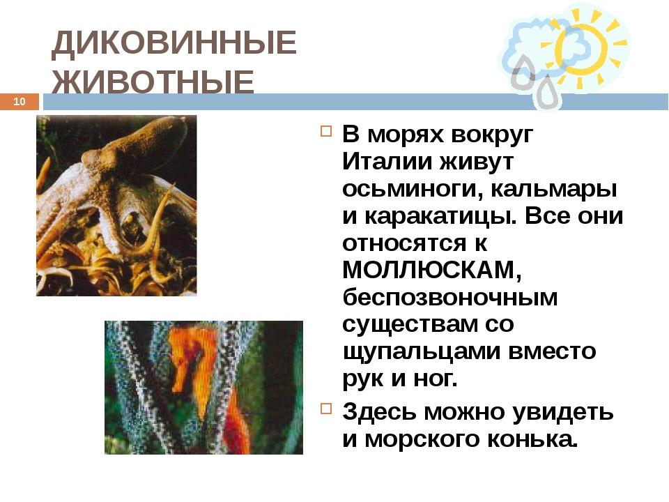 ДИКОВИННЫЕ ЖИВОТНЫЕ В морях вокруг Италии живут осьминоги, кальмары и каракат...