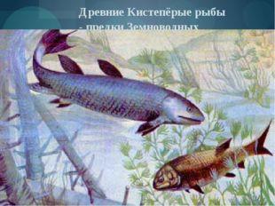 Древние Кистепёрые рыбы - предки Земноводных