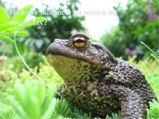 Почему жаб всегда много на огородах?