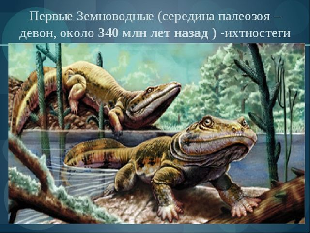 Первые Земноводные (середина палеозоя –девон, около 340 млн лет назад ) -ихти...