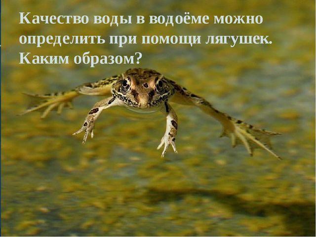 Качество воды в водоёме можно определить при помощи лягушек. Каким образом?