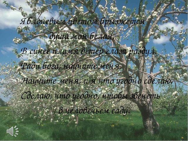 Яблоневым цветом брызжется душа моя белая, В синее пламя ветер глаза разду...