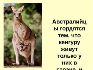 Австралийцы гордятся тем, что кенгуру живут только у них в стране, и даже по