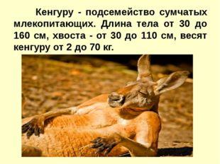 Кенгуру - подсемейство сумчатых млекопитающих. Длина тела от 30 до 160 см,
