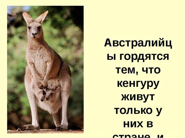 Австралийцы гордятся тем, что кенгуру живут только у них в стране, и даже по...