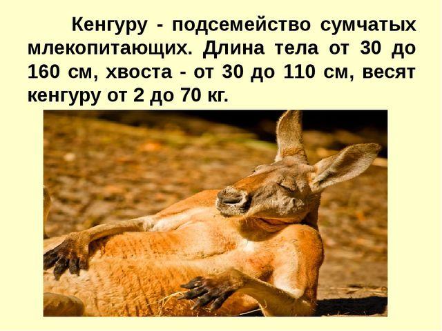 Кенгуру - подсемейство сумчатых млекопитающих. Длина тела от 30 до 160 см,...