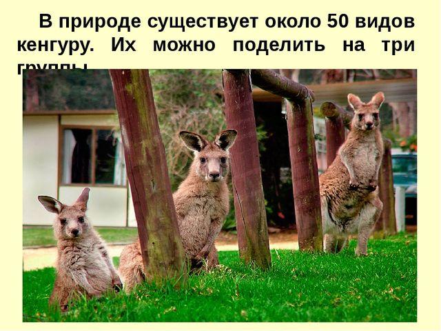 В природе существует около50 видов кенгуру. Их можно поделить на три группы