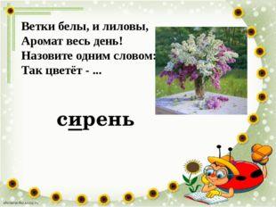 Ветки белы, и лиловы, Аромат весь день! Назовите одним словом: Так цветёт - .