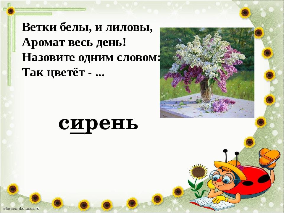 Ветки белы, и лиловы, Аромат весь день! Назовите одним словом: Так цветёт - ....