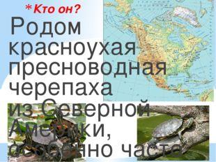 Кто он? Родом красноухая пресноводная черепаха из Северной Америки, особенно