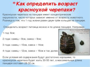 Как определить возраст красноухой черепахи? Красноухая черепаха на панцире им