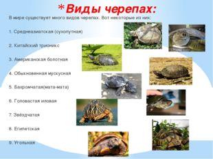 Виды черепах: В мире существует много видов черепах. Вот некоторые из них: 1.