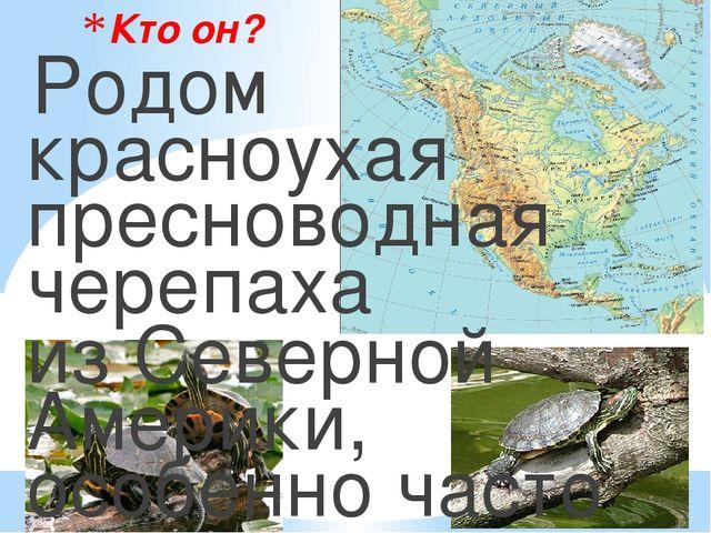 Кто он? Родом красноухая пресноводная черепаха из Северной Америки, особенно...