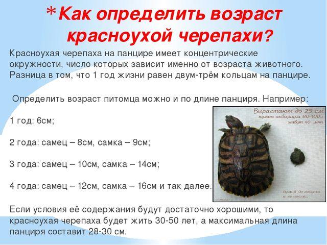 Как определить возраст красноухой черепахи? Красноухая черепаха на панцире им...