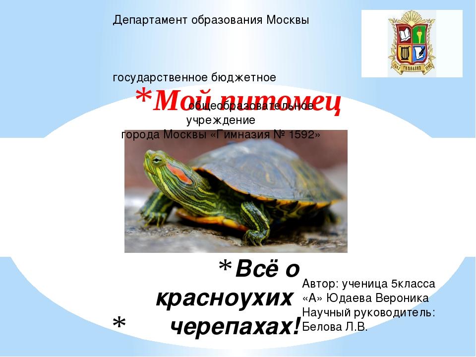 Всё о красноухих черепахах! Мой питомец Департамент образования Москвы госуда...