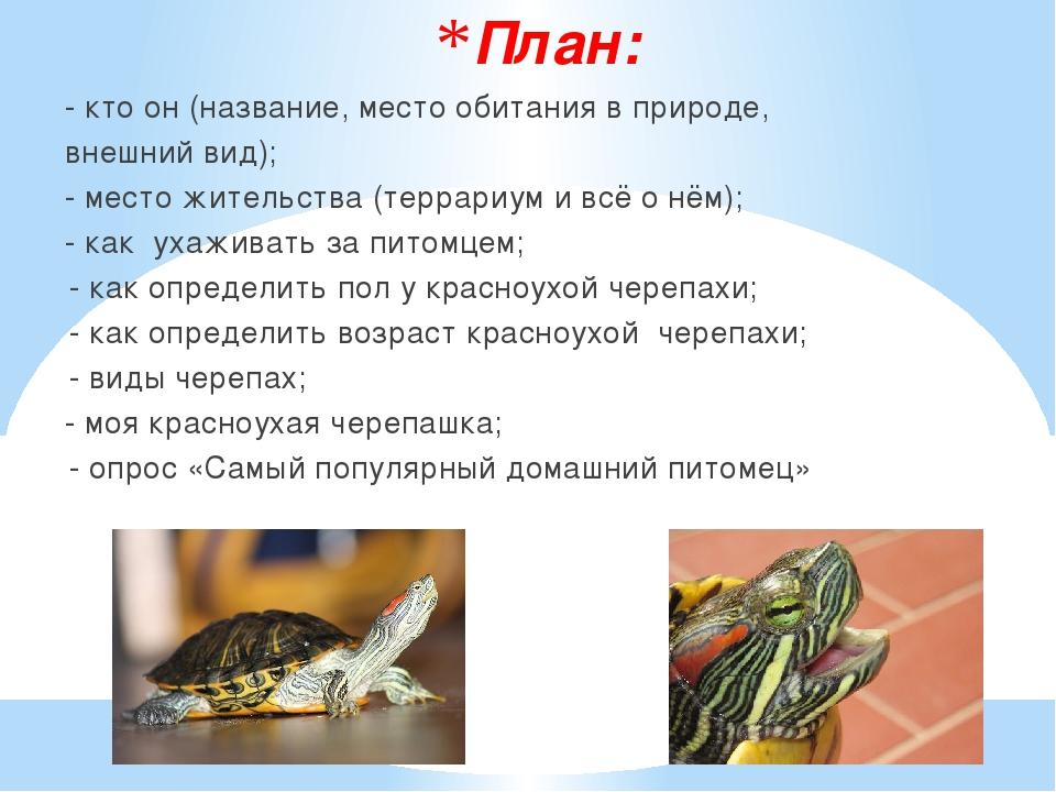 План: - кто он (название, место обитания в природе, внешний вид); - место жит...