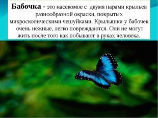 Бабочка - это насекомое с двумя парами крыльев разнообразной окраски, покрыты
