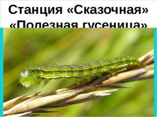 Станция «Сказочная» «Полезная гусеница»