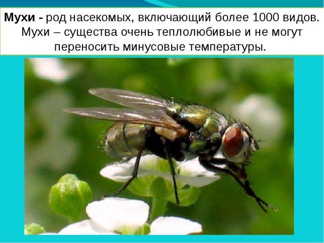Мухи - род насекомых, включающий более 1000 видов. Мухи – существа очень тепл...