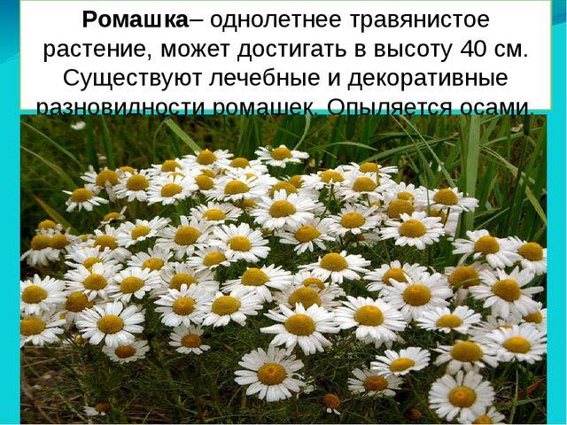 Ромашка– однолетнее травянистое растение, может достигать в высоту 40 см. Сущ...