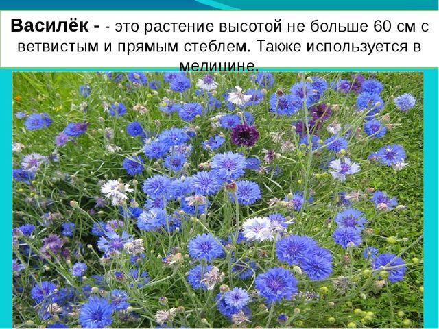 Василёк - - это растение высотой не больше 60 см с ветвистым и прямым стеблем...