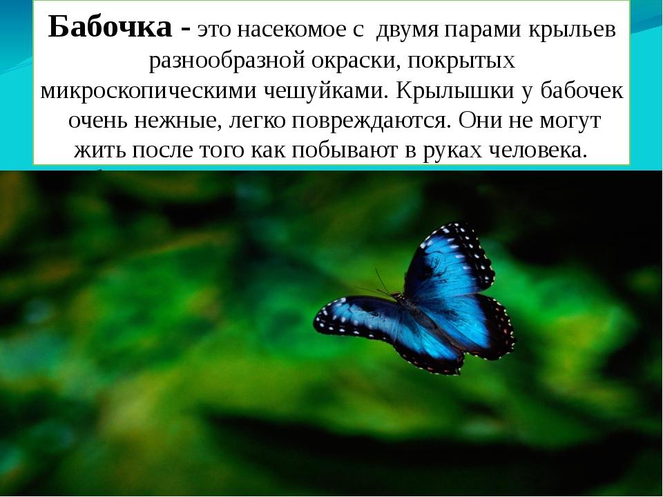 Бабочка - это насекомое с двумя парами крыльев разнообразной окраски, покрыты...