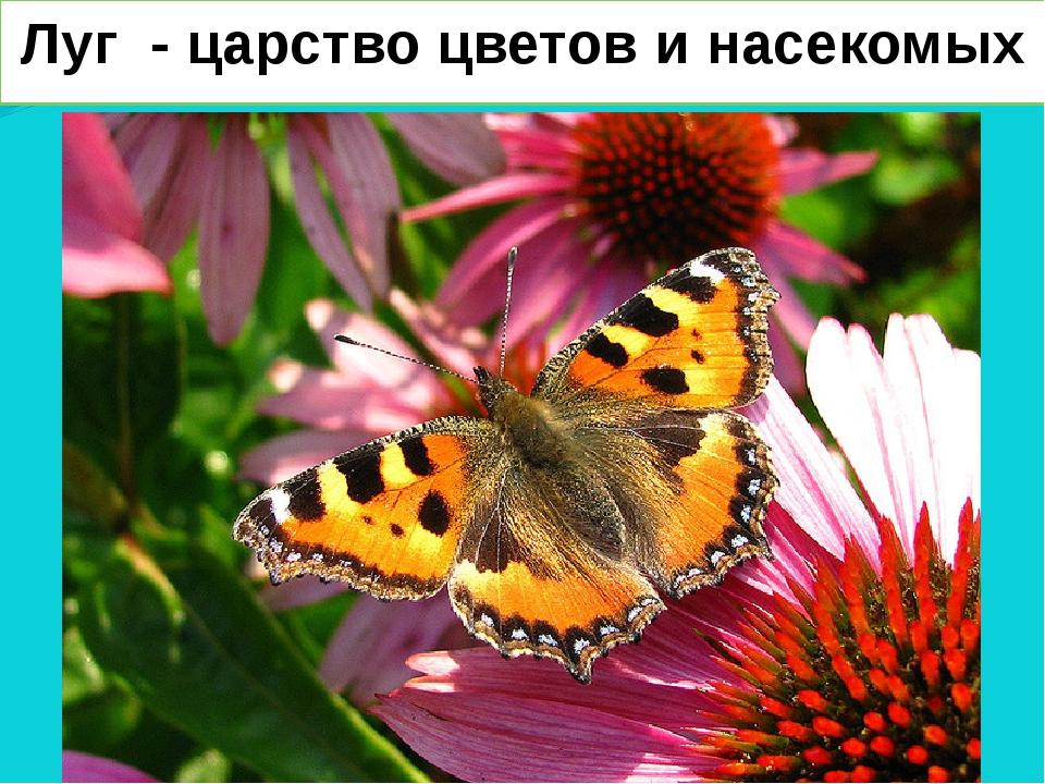 Луг - царство цветов и насекомых
