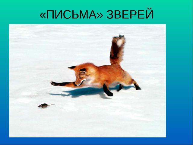 «ПИСЬМА» ЗВЕРЕЙ