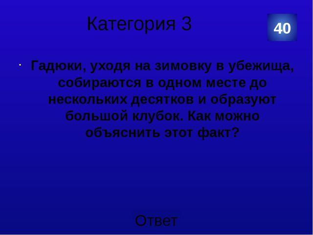 Категория 4 Дятел 10 Категория Ваш ответ