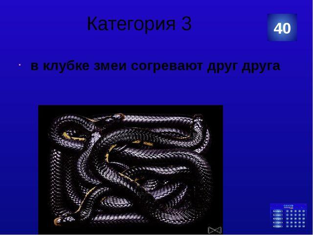 Категория 4 Дятел вальдшнеп 20 Категория Ваш ответ