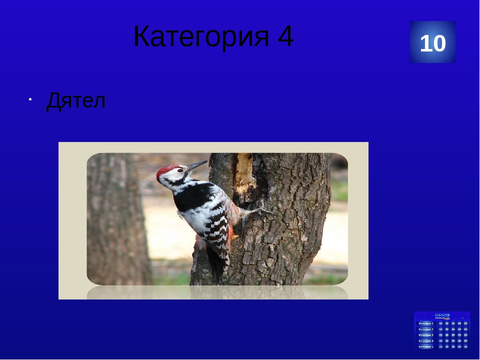 Категория 5 нутрия 20 Категория Ваш ответ