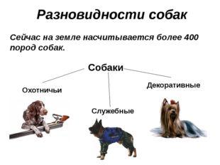 Разновидности собак Сейчас на земле насчитывается более 400 пород собак. Охот