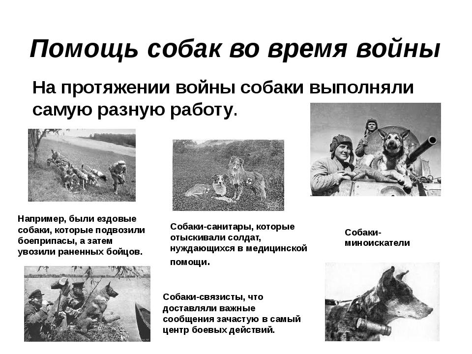 Помощь собак во время войны На протяжении войны собаки выполняли самую разну...