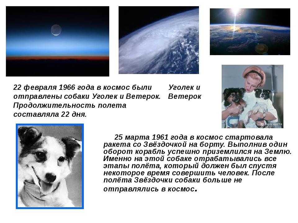 25 марта 1961 года в космос стартовала ракета со Звёздочкой на борту. Выполн...