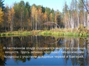 В лиственном опаде содержится много питательных веществ. Здесь активно протек