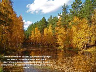 Осенью опавшая листва деревьев образует на земле плотный ковер, который посте