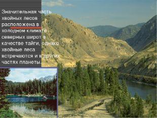 Значительная часть хвойных лесов расположена в холодном климате северных широ